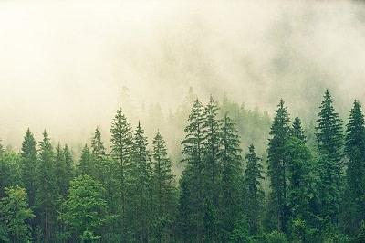 Ballade en forêt France