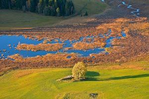 tourbière parc naturel jura
