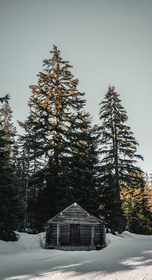 cabane en bois dans une forêt enneigée